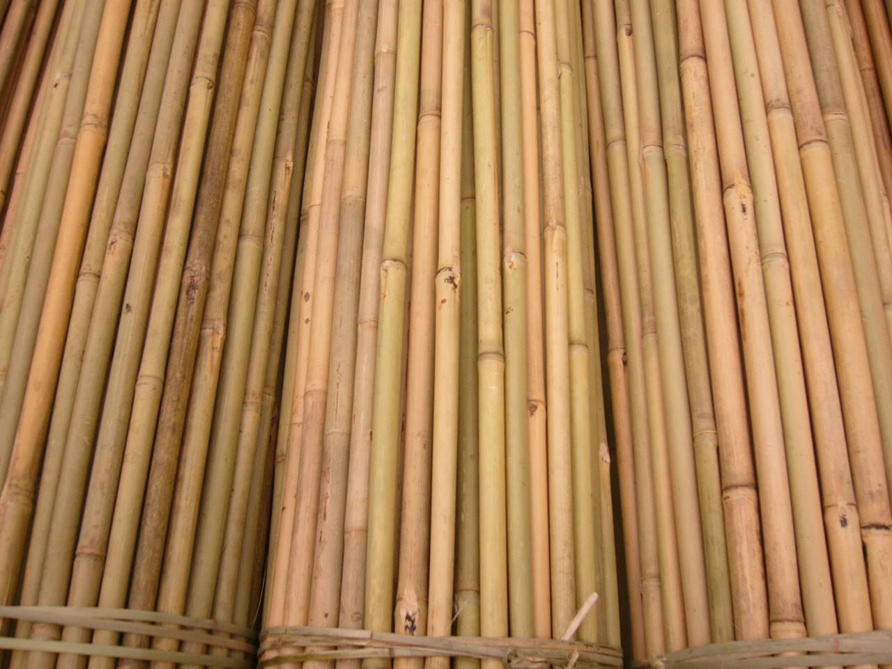 bamboo sticks Indianindustrycom largest searchable online b2b marketplace providing listings of bamboo sticks manufacturers, suppliers and exporters in india.